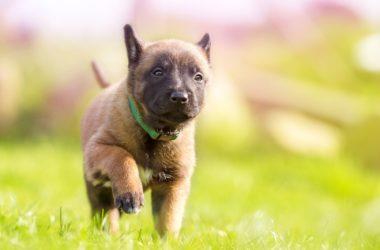 puppy-1726419_1920